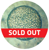 embryo_sold out_round image-01