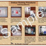Embryo Flushing Procedures