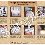 Embryo Processing Procedures