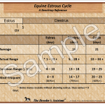 Equine Estrous Cycle and Follicle Growth & Ovulation