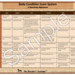 Equine Body Condition Score System