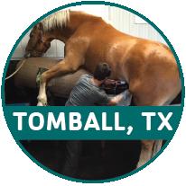 horse_TB_round image-01