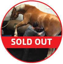 horse_sold out_freezing