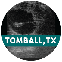 Sept 20-21: Equine Reproductive Ultrasound