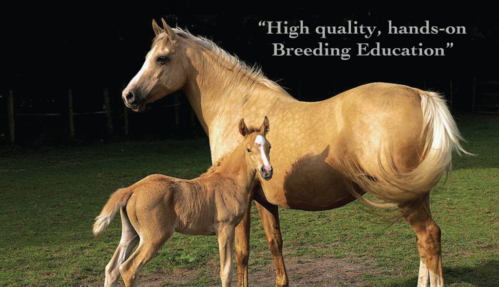 equine reproduction class